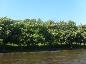Bomen Singel