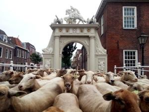 schapen poort